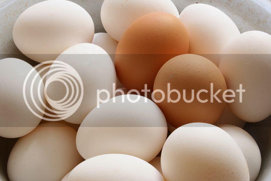 photo bigstockphoto_eggs_1476910-1_zps6c20d87a.jpg