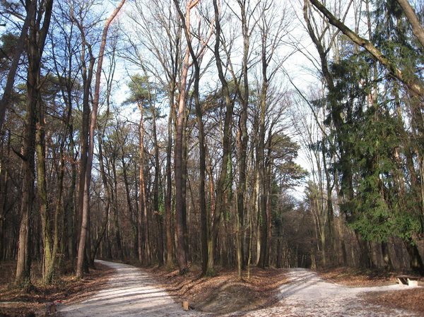 forest paths: none