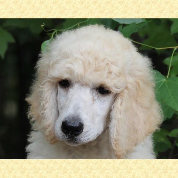 Kenya Hodge - Google+ | Cute animals, Cute little dogs ...