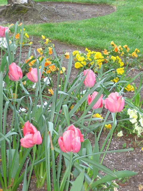 riverplace_tulips
