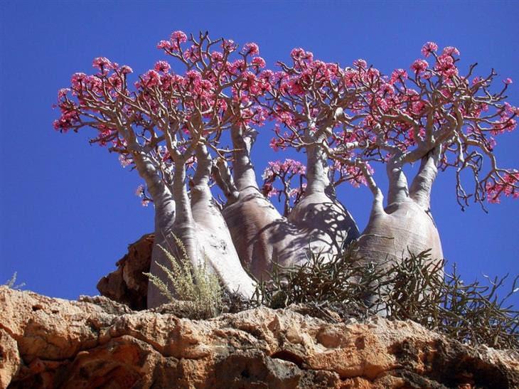 árvores bonitas