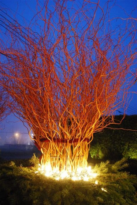 lighted willow branches   Small Budget Gardening