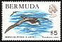 Bermuda Petrel Pterodroma cahow