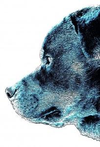Il presidente del consiglio dei cani
