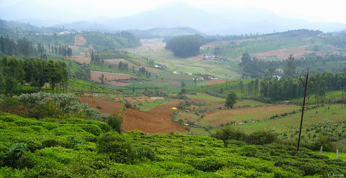 countryside ooty