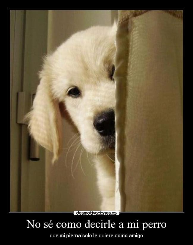 Frasesamor Frases De Amor Para Tus Perros