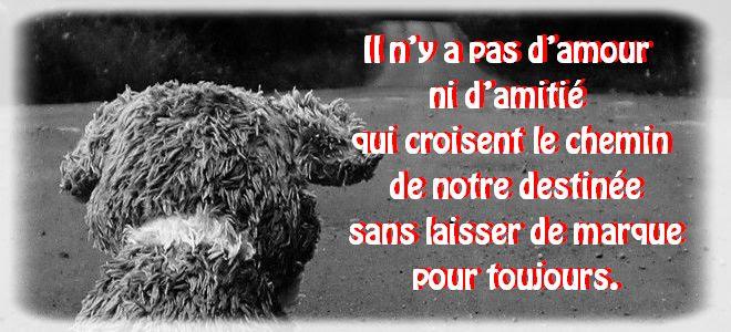 Citation Amour Perdu Tristesse