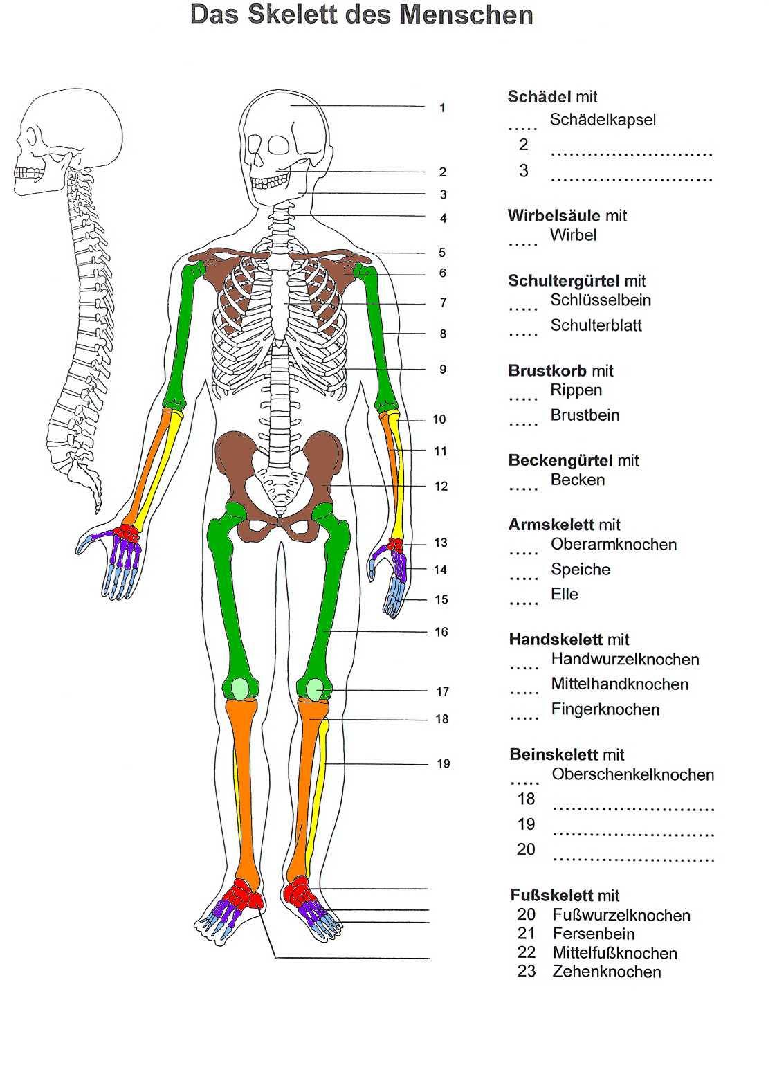 20 Skelett Zum Ausdrucken   Besten Bilder von ausmalbilder