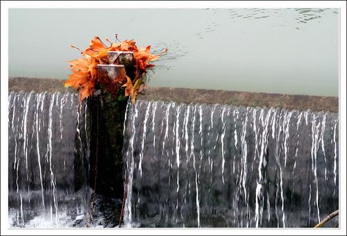 hojas en la corriente, aferradas
