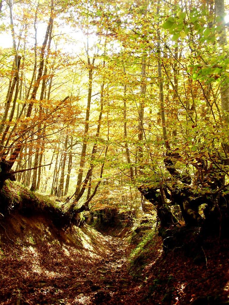 Bosque de Lindes 011