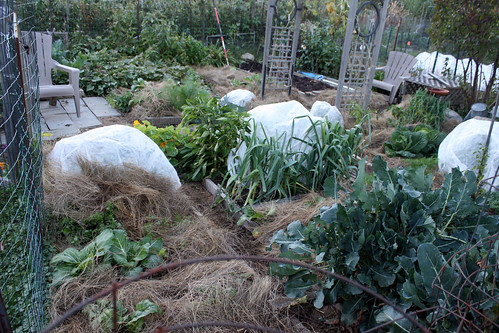 frost protected garden 017