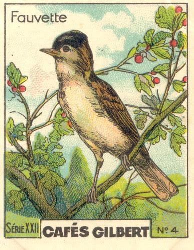 gilbert oiseau 3