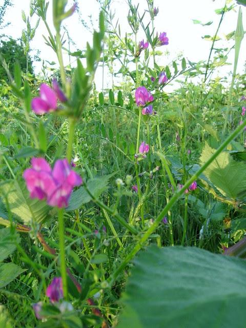 naito_plants2