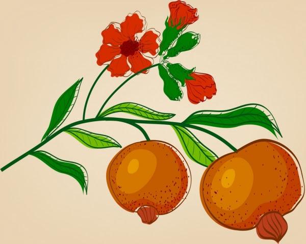 Bunga Buah Delima Ikon Berwarna Handdrawn Sketsa Gambar Vektor Icon