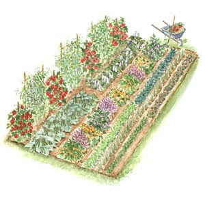 ss_vegetable_garden