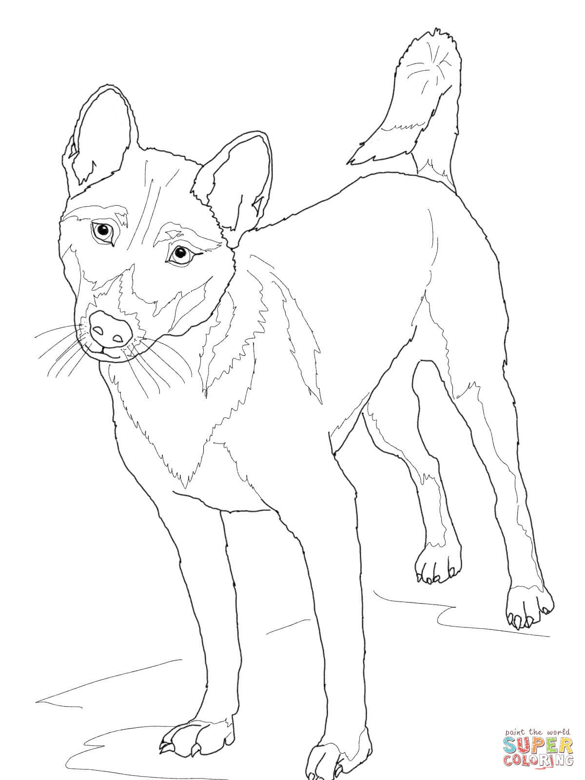 New Guinea Singing Dog coloring page | Free Printable ...
