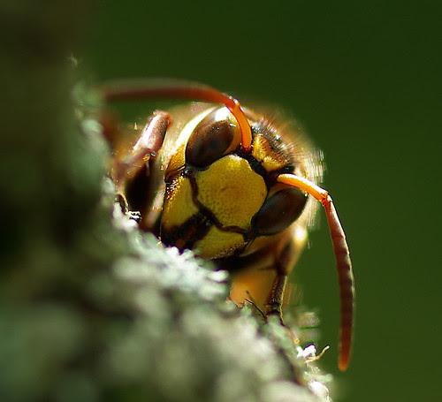 Tittut/Peekaboo by sorundalasse, on Flickr