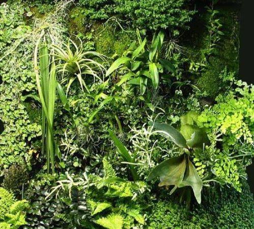 πράσινος τοίχος - λεπτομέρεια