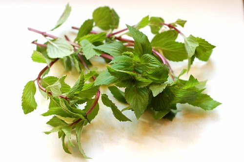 Fresh mint from our yard by Eve Fox, Garden of Eating blog, copyright 2012