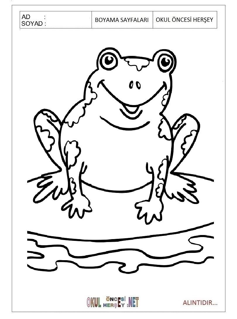 Kurbağa Boyama Sayfaları