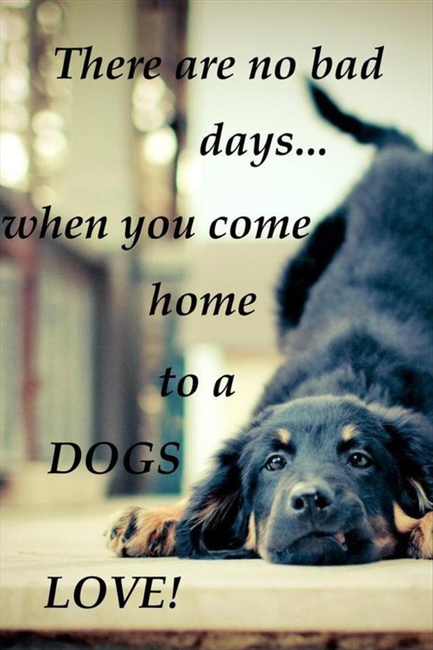 there are no bad days when you come home to a dogs love, love quotes  Dump A Day