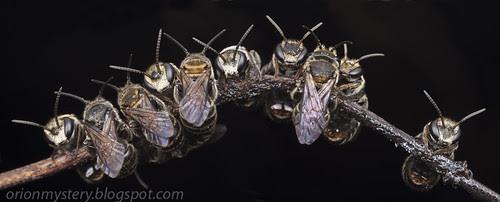 sleeping bees IMG_3003 merged copy