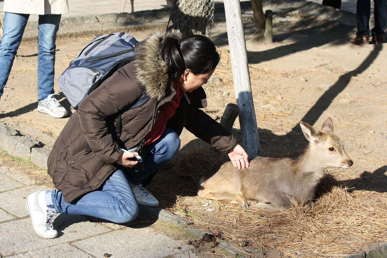 Claire saying hi to the deer in Nara, Japan photo 2013-12-22183111_zps49a537c1.jpg