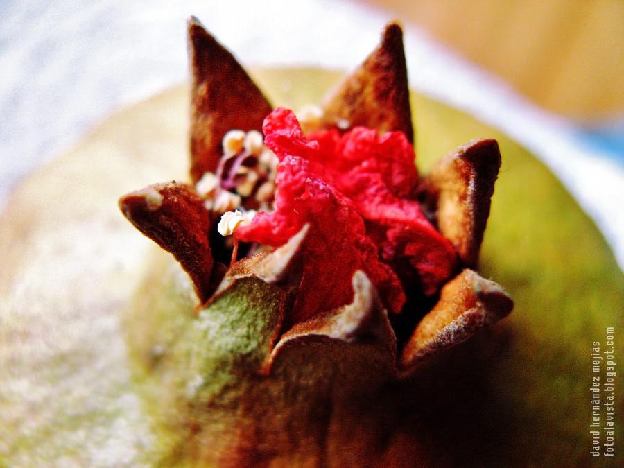 Caballero de largo abrigo rojo agarrando una flor sobre la corona de una granada: #Reto Macro