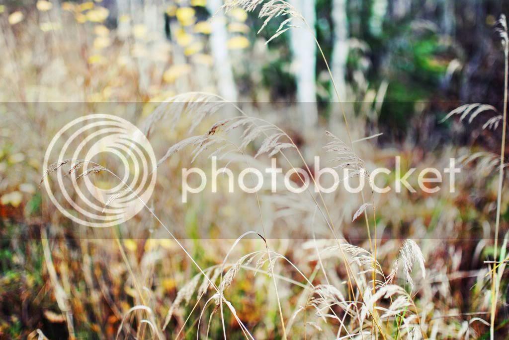 photo DSC_0035ndashkopio_zps37b011e4.jpg