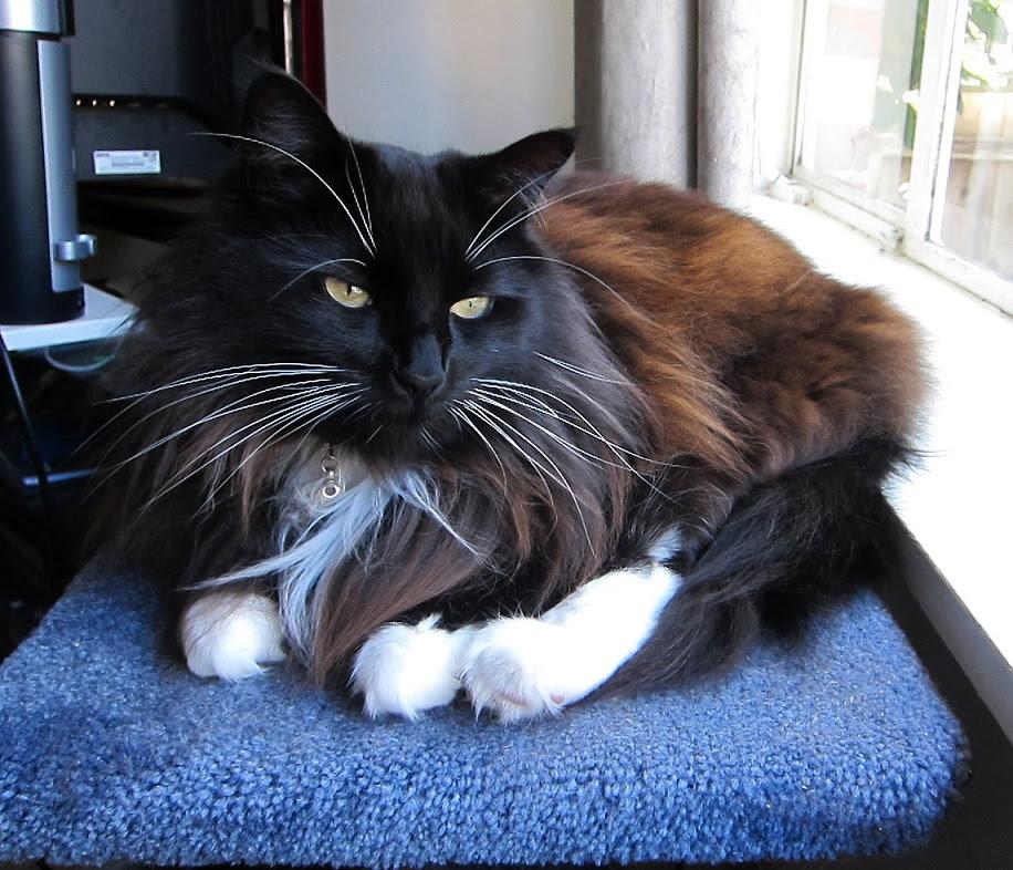 cat-blobby2
