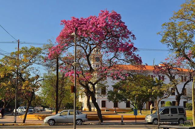 Lapachos 2013