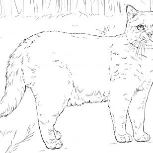 persian cat coloring pages at getdrawings  free download