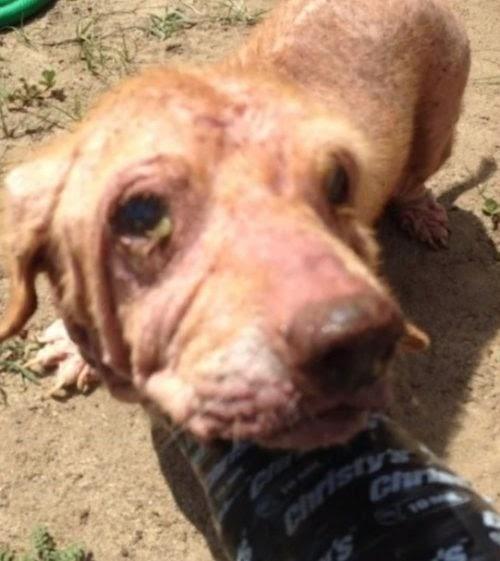 15 perros son rescatados viviendo en condiciones inmundas y su dueña se enfrenta a 32 cargos