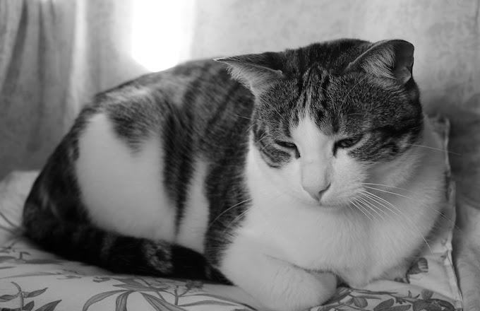 Meu gato não quer comer e está triste. O que fazer?