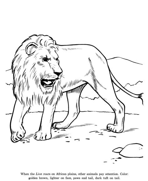 animal drawings coloring pages lion animal