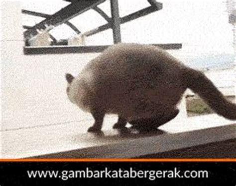 gambar animasi binatang lucu bergerak kucing loncat tapi