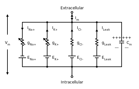 Diagram of the electrical circuit for a short segment of squid giant axon