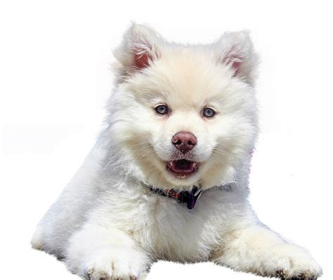 photo dog isolated purebred dog white dear pet animal