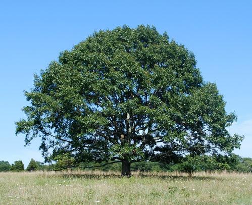 Watsons Farm tree