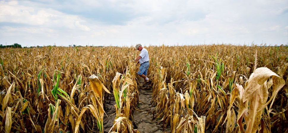 072612_Midwest_Drought_1725x810 PAN_19057