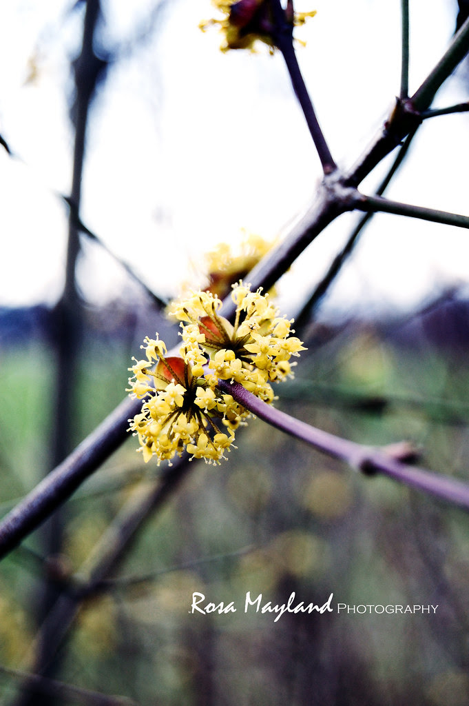 Spring Flowers 1 1 bis