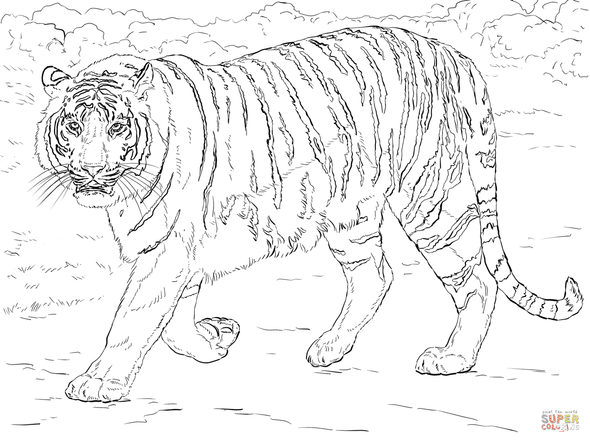 96 Top Coloring Pages For Adults Tiger Pictures
