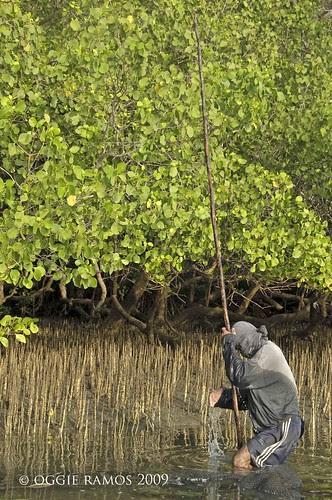 bacungan mangrove fisherman