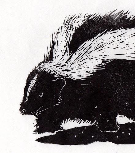 skunk detail