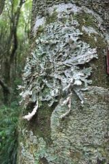 NZ 061