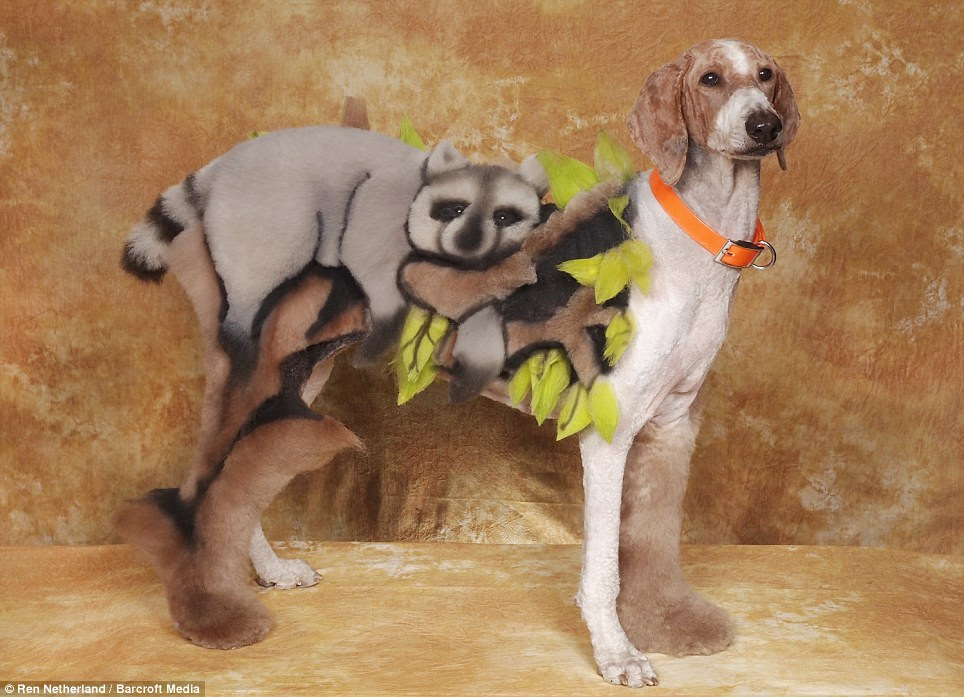 Bizarre: Although in real life they couldn't look any more different, this mongrel hound dog is supposed to look like a raccoon