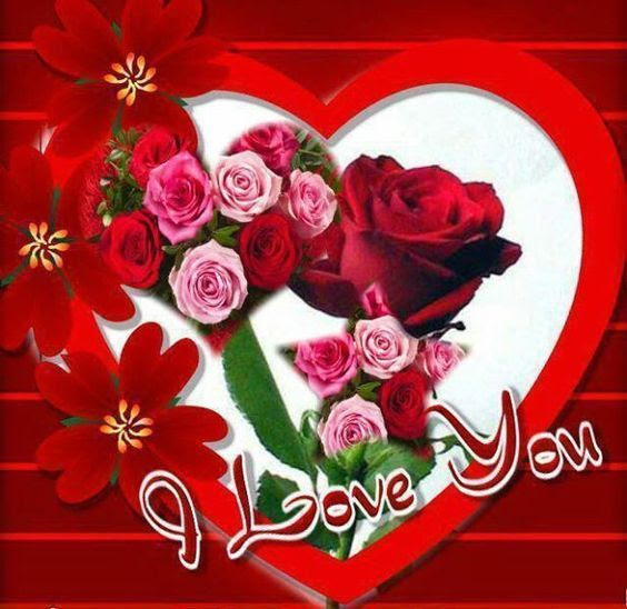 Red Rose I Love You Pictures Photos And Images For Facebook