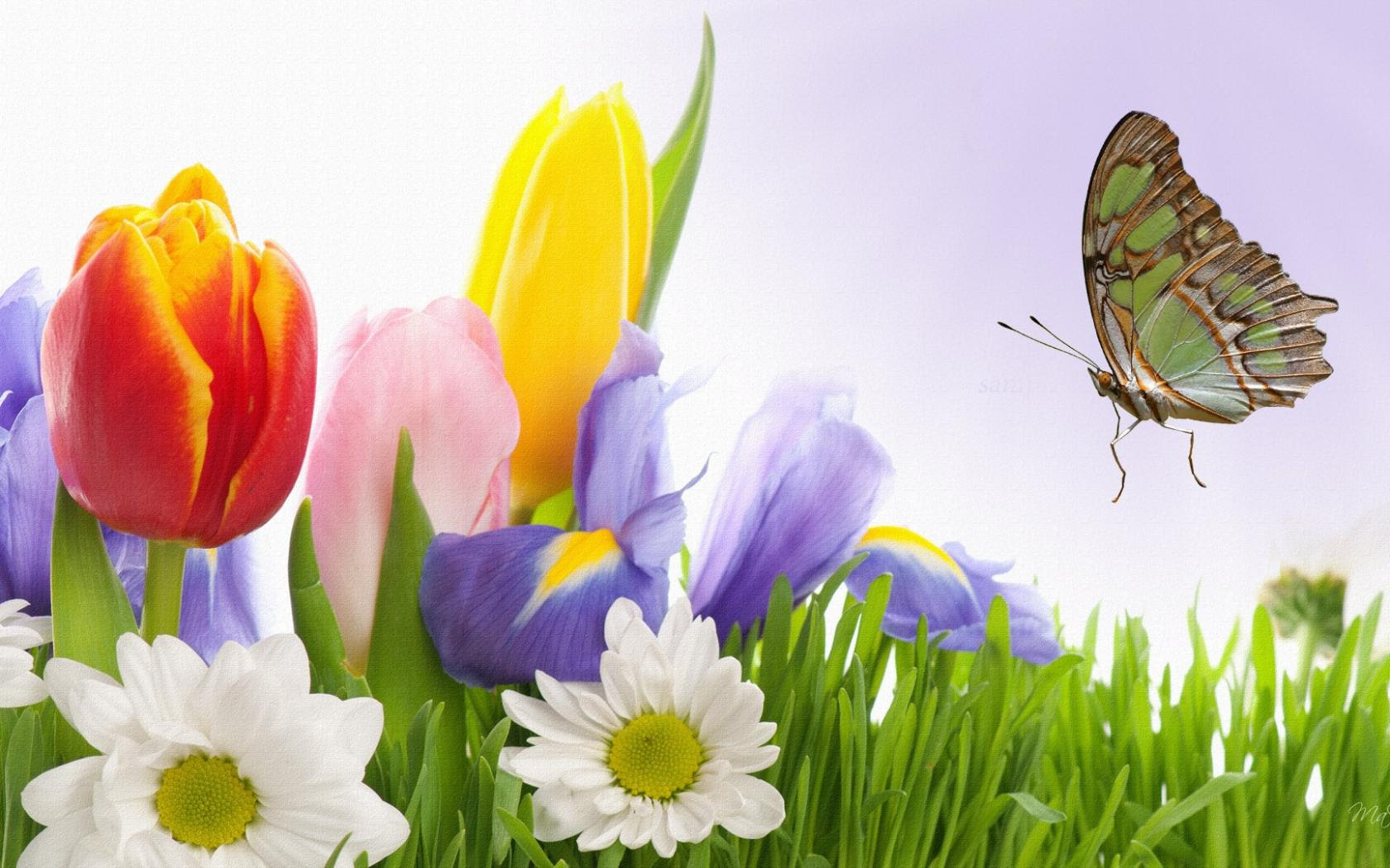 Images Of Spring Flowers And Butterflies Top Collection Of
