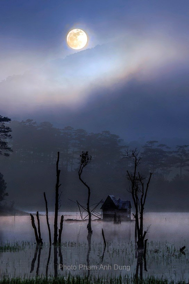 Qua màn sương, Trăng Đà Lạt dường như thật to, thật gần gũi, mềm mại và thật êm đềm lãng mạn. Tưởng như có thể kiểng chân mà hái được trăng cho riêng mình.Tiếng dế gáy, tiếng côn trùng như xa xôi, mơ hồ, khắc khoải.Dưới tán thông rì rào gió thoảng, tiếng con chim đêm gọi bầy tha thiết, bơ vơ.