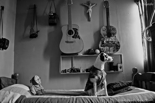 El perrito artista Fox Terrier by Alejandro Bonilla